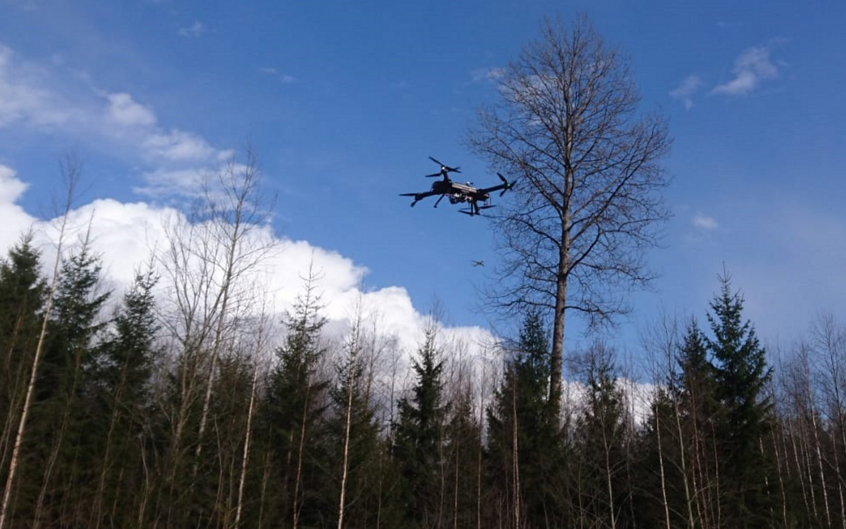UAV mapping a forest