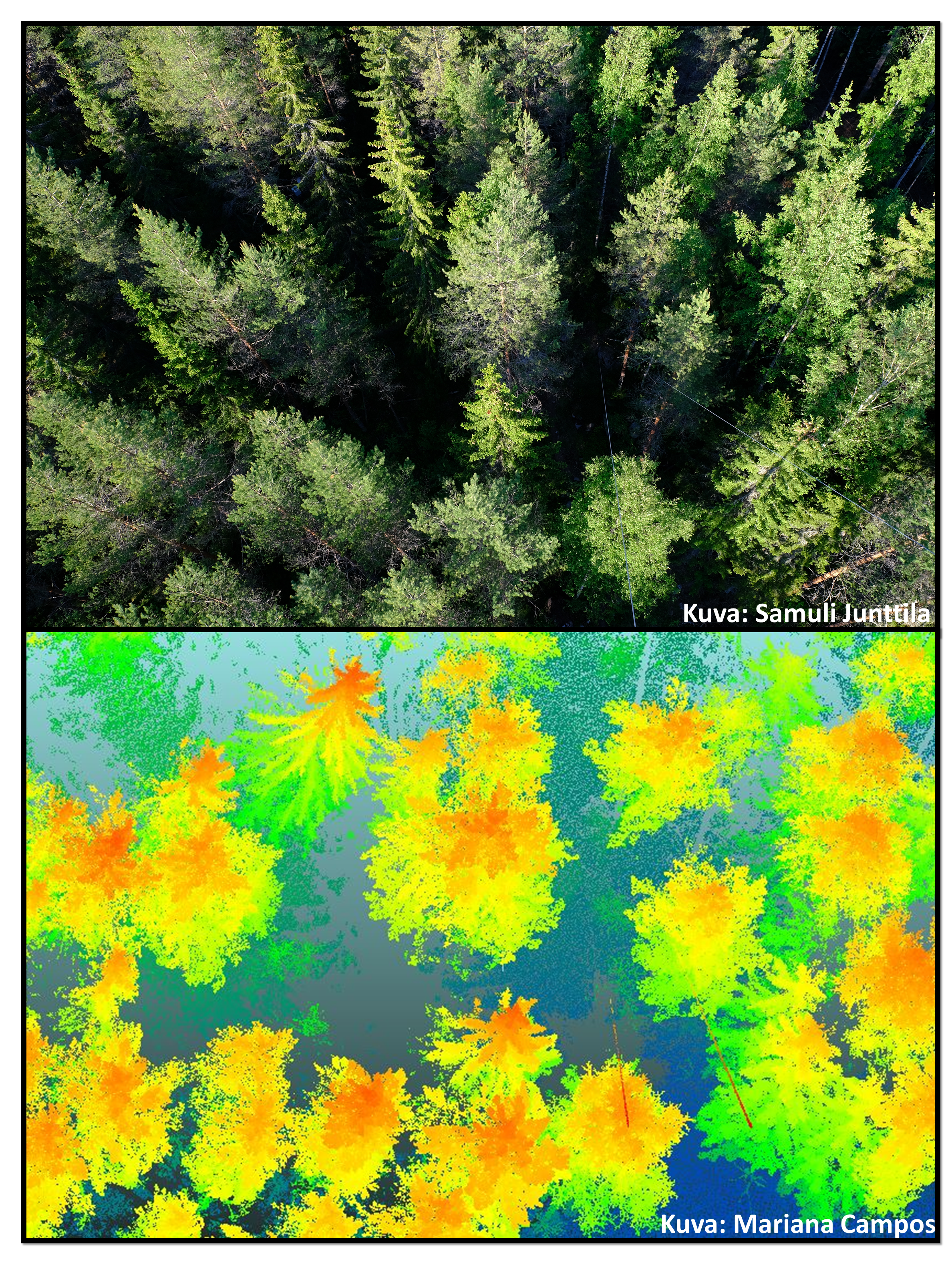 Laser scanning data and a photo of the same forest are.
