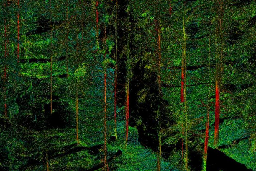 point cloud of a forest.